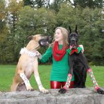 Fawn Great Dane - Black Great Dane - Christmas