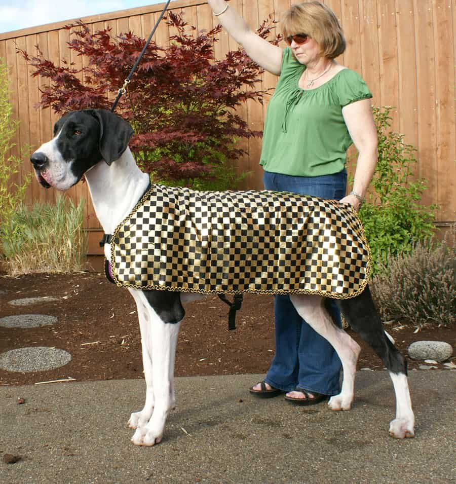 Wearables Cool Coats Leashes Willamette Valley Great Dane Club